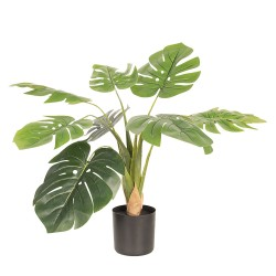 Decoratie plant Monstera...
