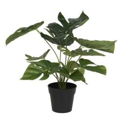 Decoration plante...